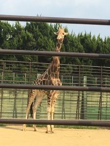 姫路城 動物園